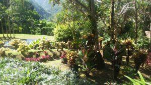Jardin de fleur de Balata - Martinique